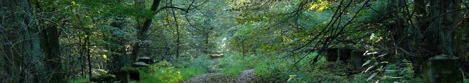 Naturschutzgebiet Colbitzer Lindenwald